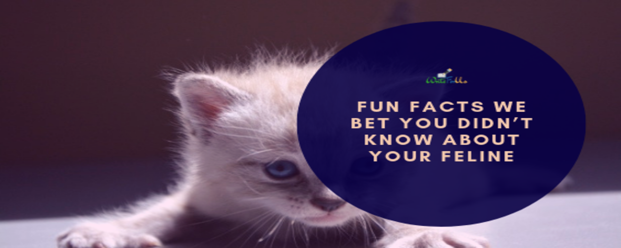 Fun Facts About Feline