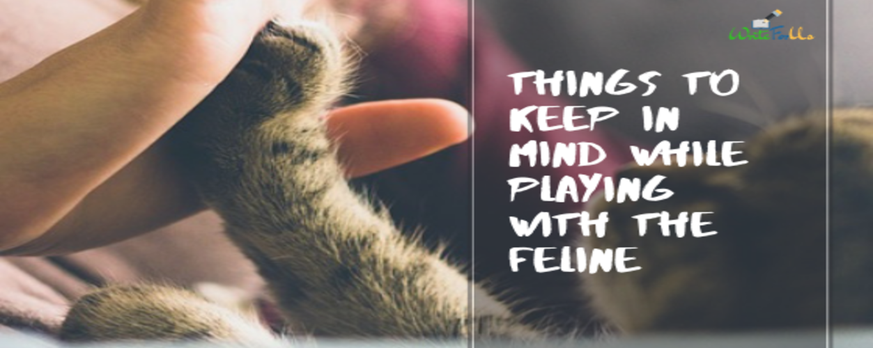 Keep in Mind While Playing with feline