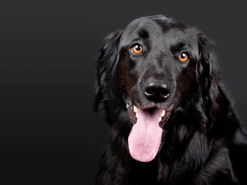 5 Tips To Keep Your Dog Healthy And Blissful